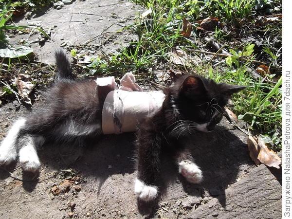 Корсет совершенно не мешает котёнку