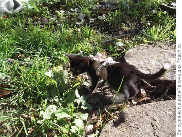 Корсет для котёнка