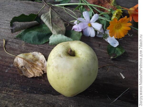 Воронка яблока