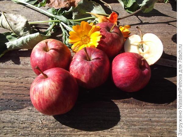 Яблоки № 8 и 9