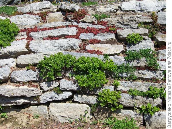 Подпорная стенка-утёс с растениями