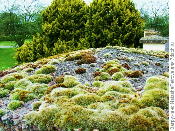 Декоративный участок каменистой тундры