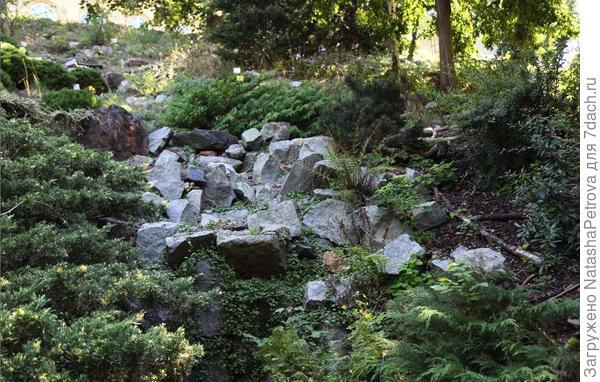 Каменистый склон оврага. Ботанический сад Карлова университета, Прага. Фото с сайта http://design-project.org/