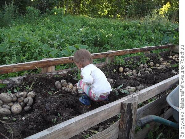 Люба и картошка