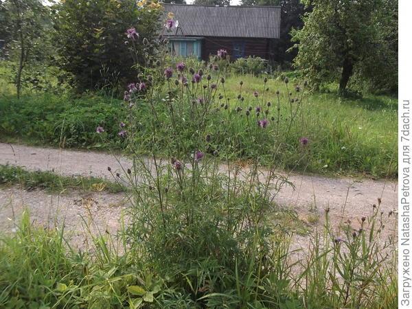 Дом одних из ближайших соседей, вид с дороги около нашего дома