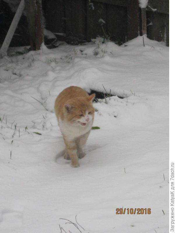 кот и первый снег