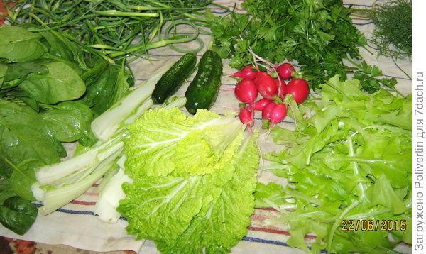июньский салатик