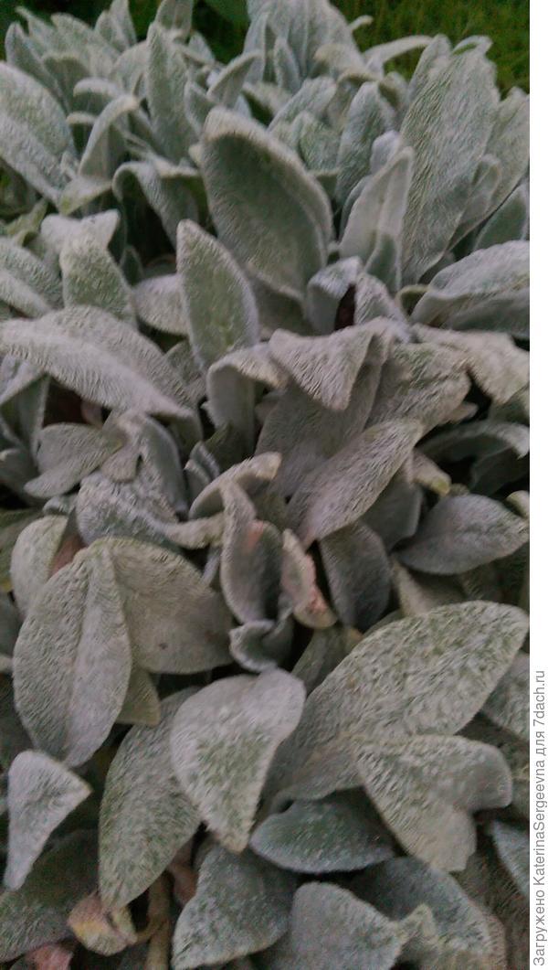 Подскажите, как это растение называется и как за ним ухаживать?