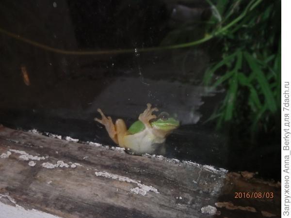 Охота лягушонка на моём окне