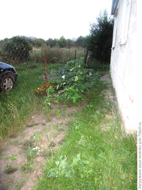 палисадник перед домом, длина около 9 м, ширина от 1,8м вначале  до 1,6м в конце