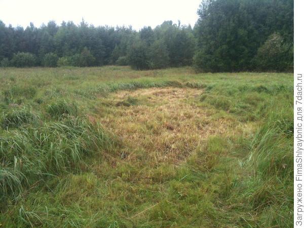 Жесткая болотная трава для подстилки