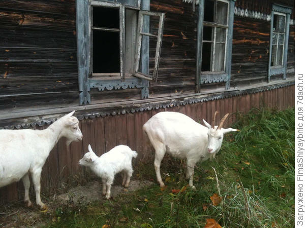 Феня, Принцесса и Маруська осенью 2016 года