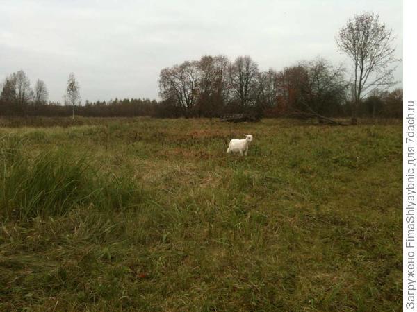 Двухмесячный козлик Безназвания - самый мелкий из козлов