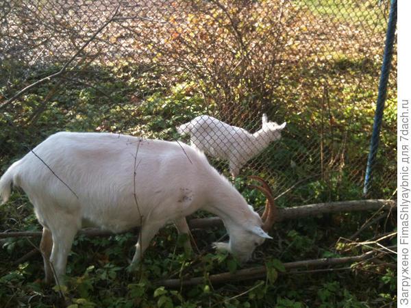 Маруся и Принцесса за забором
