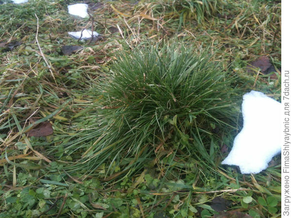Трава, как она есть в этом ноябре