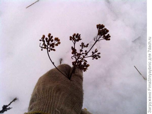 Зимняя трава