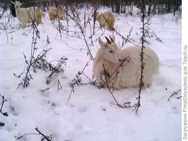 Принцесса в снегу