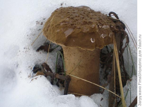 Нашли гриб с козами