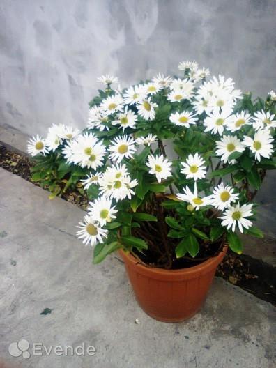 опознать цветок