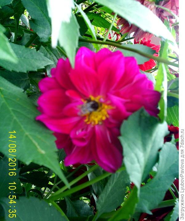 труженица пчёлка