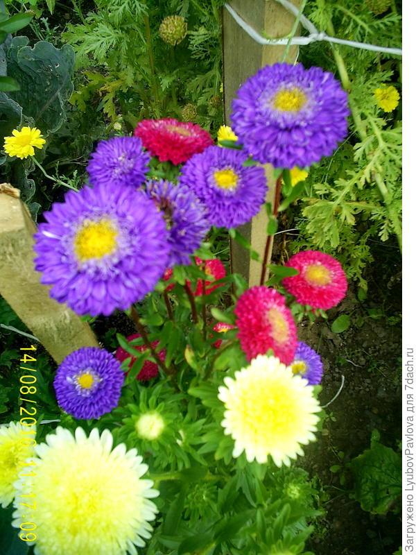Таких ещё цветёт немножечко)))