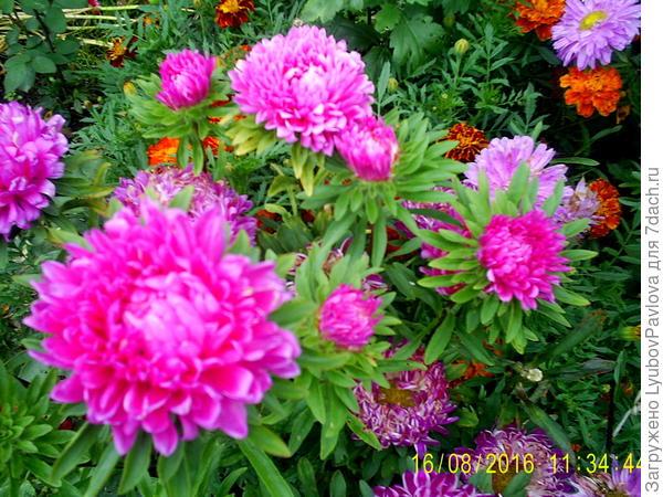 Такие ещё цветут))))