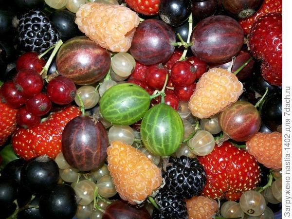 ягоды, выращенные на моем участке