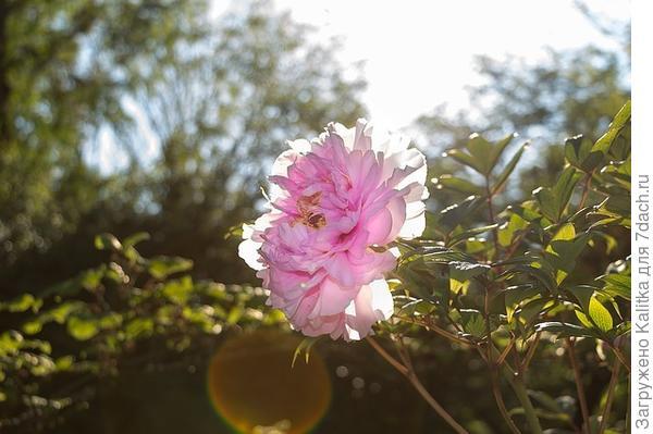 Я никогда не видела столь прекрасных существ, как эти цветы...
