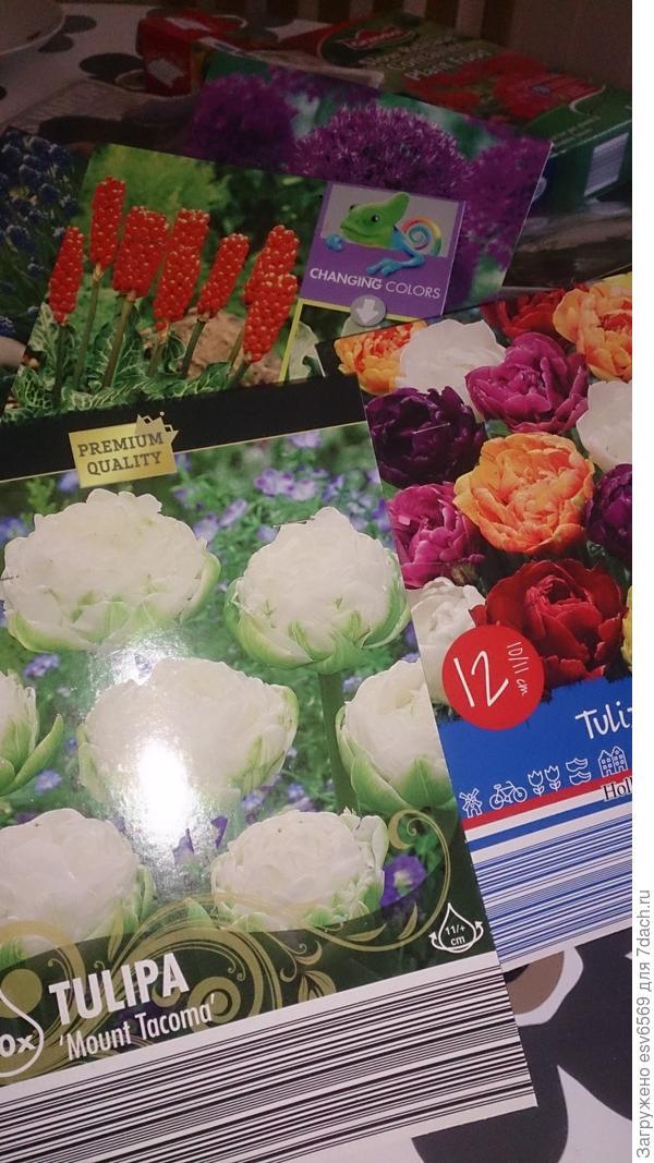 Можно ли сажать цветочные луковицы в горшки?