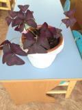 Подскажите название комнатного растения и способы ухода.