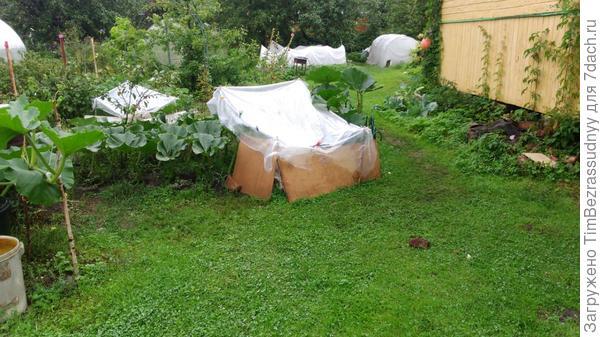 укрытие для тыквы