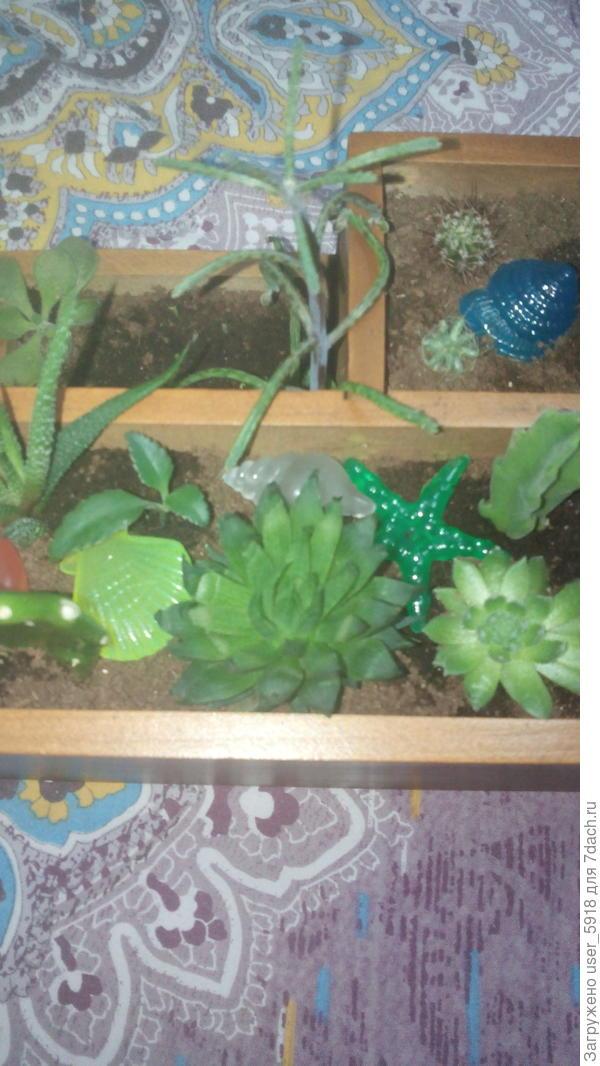 Помогите опознать растение, то что в центре, под прозрачной ракушкой.