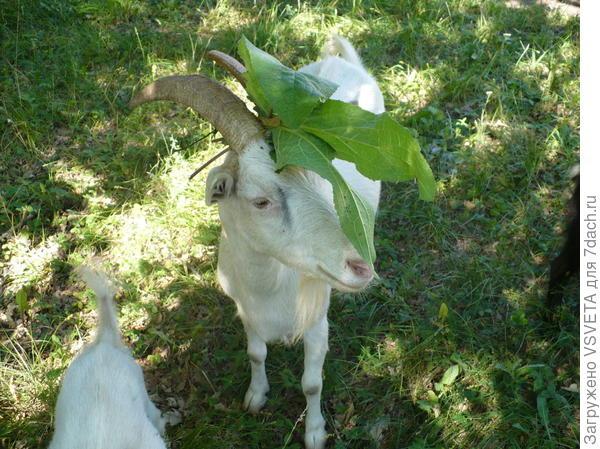 Соседская блудня Белка с ирокезом. Моя Маня никогда себе такое поведение не позволяла