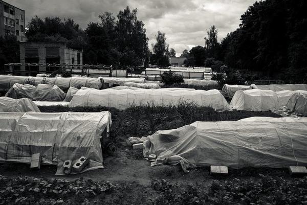 Огурцы в Шклове — это местная национальная идея, фетиш и предмет гордости