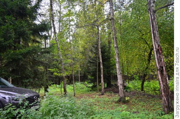 Елочки в нашем лесу.