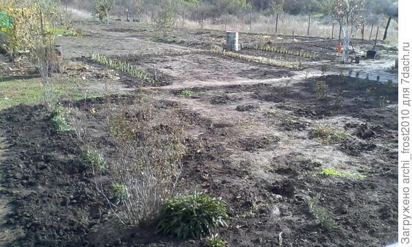 """слева 2 куста Спиреи """"Вангутта"""", между ними гортензия древовидная. Это посадила прошлой осенью."""