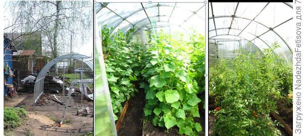 как строили теплицы и урожай