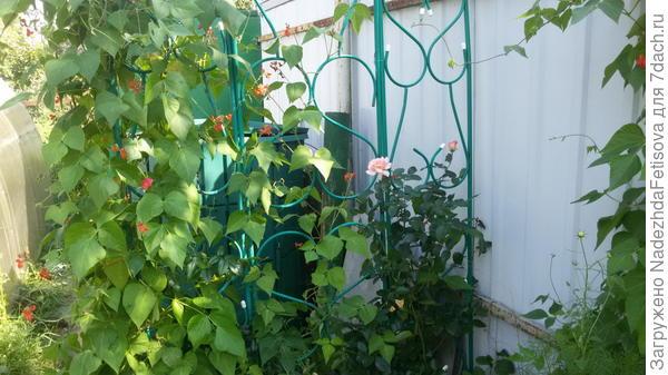 вот компостер спрятан за решеткой с цветами