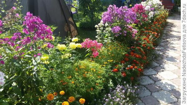 цветы у дорожки