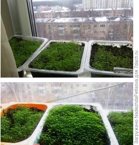 мои маленькие газончики