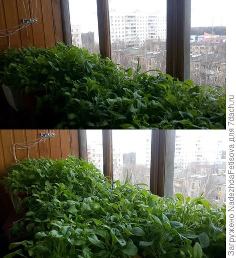 плантация на балконе