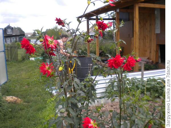 В огороде осталось небольшое количество цветов в зоне отдыха (виден хозблок с недостроенной верандой для отдыха во время работы)