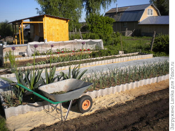 Постепенно устаиваем закрытые грядки, что значительно упрощает работу в огороде.