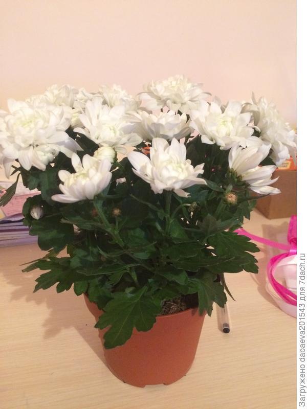 Подскажите, что это за цветок. ????
