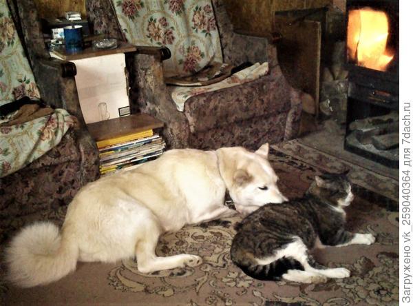 Псица-Чумица (Умка) очень любит кота и греться у печки в морозы.