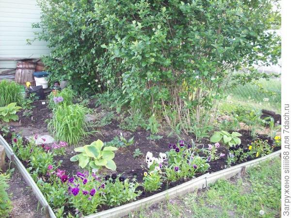 Постепенно увеличивается видовое разнообразие растений 2015 г.