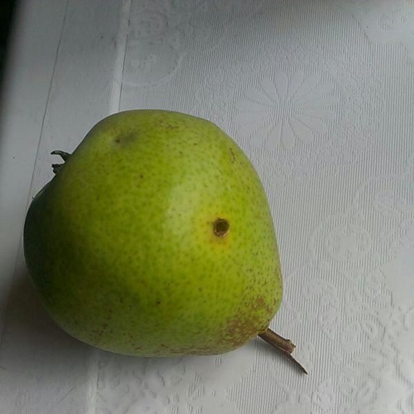 Что это с грушой, кто то ее ест?