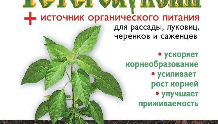 """""""Волшебный гормон роста"""" - гетероауксин"""