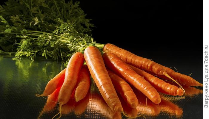 Как хранить морковь правильно