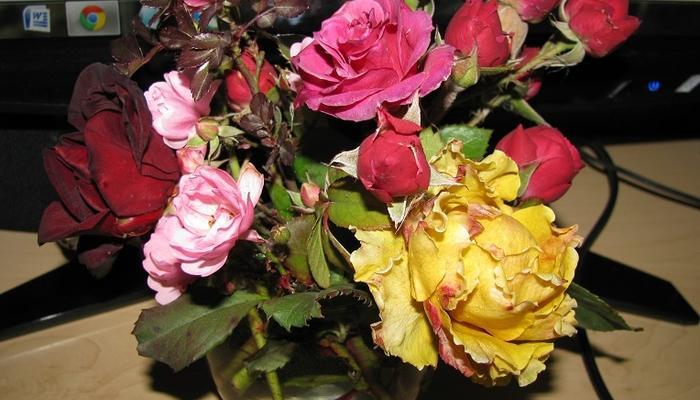 Букет из зимних роз со своей клумбы!